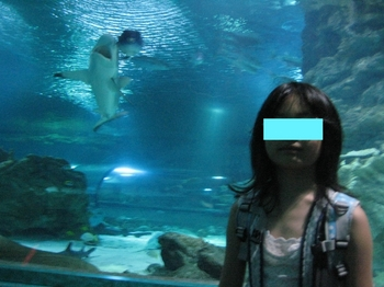 サメ1.jpeg