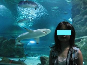 サメ2.jpeg